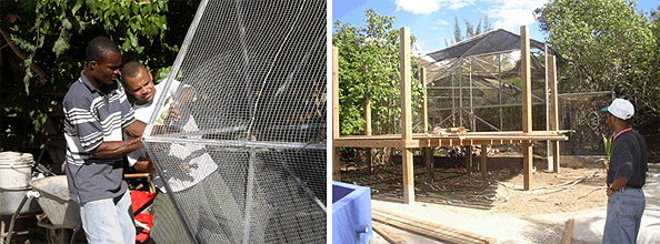Construction of the aviaries and the Macaw aviary.