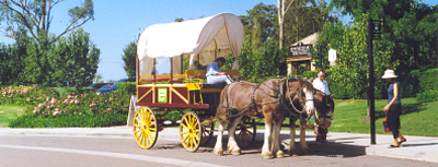 A carriage and draft horses stood in the hot sun by the side of the road