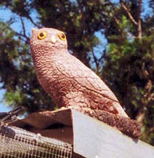 Stone owls keep watch over the aviaries!