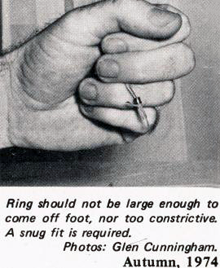 Ring should not be large enough to come off foot, nor too constrictive.  A snug fit is required... Closed Ringing of Finches by Glen Cunningham (ASNSW)
