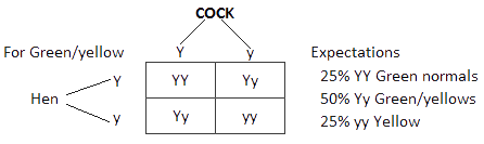 Genetics for Bird Breeders (Part I) - Figure  1