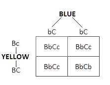 Genetics for Bird Breeders (Part I) - Figure  3