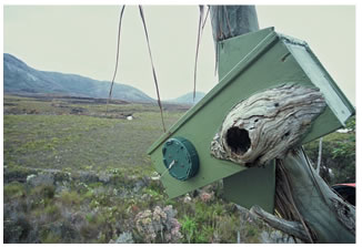 Consistent standard nest box used for the Orange-bellied parrots