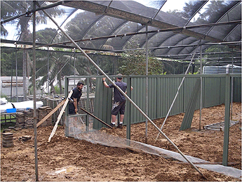 Construction of the Lord Howe Island Woodhen pens