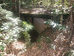 WWII Concrete Bunker deep in the rainforest