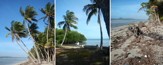 Coconut palms along the beaches and litter on the beaches