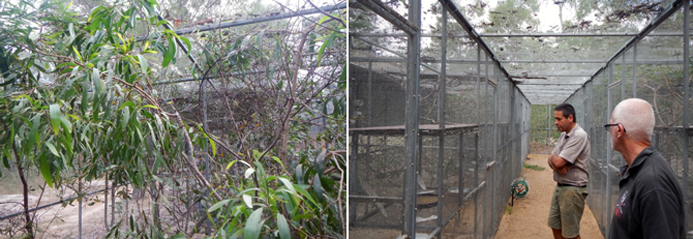 Gouldian release aviary and breeding aviaries
