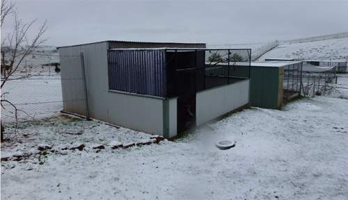 Frost on the basic 7m x 7m aviary that John Stafford's wife refers to as the ugly aviary because of its basic design