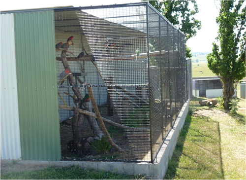 Mixed aviary bank measuring approx. 11m x 3m