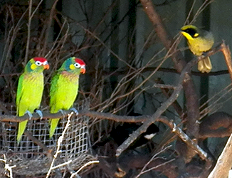 Varied Lorikeets, Yellow-tufted honeyeater and Eastern Whipbird (amongst others)!