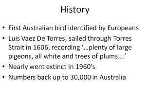 What do torres strait pigeons eat